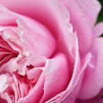1本のバラから、癒しのバラ園が始まります