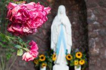 時代をこえて愛されてきたバラの香りの効果|効能と利用方法の歴史