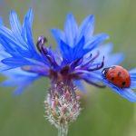 自然療法で花粉症のセルフケア