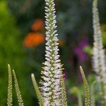 花粉症の季節は、自然療法でセルフケア